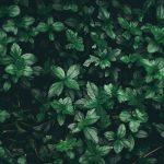 künstlicher Buchsbaum als pflegeleichter Blickfang